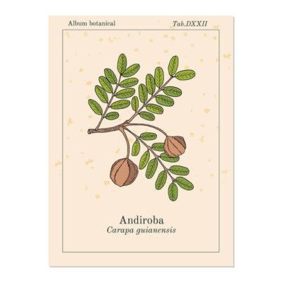 Andiroba (Carapa Guianensis) gegen Cellulite